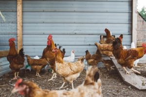 CO2 monitoring in poultry processing