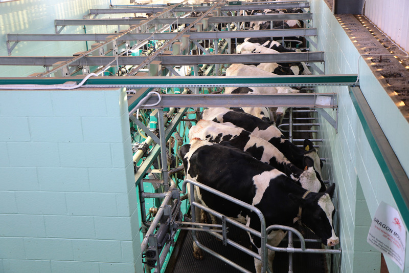 Gas sensing for the Milk Production Process