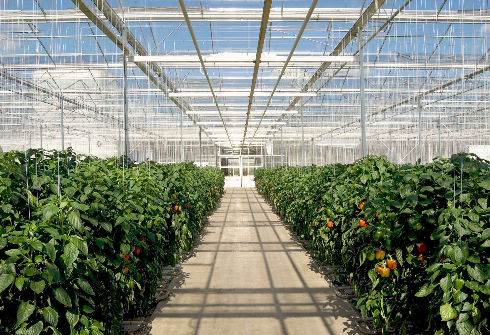 Agriculture sensors for greenhouse farming