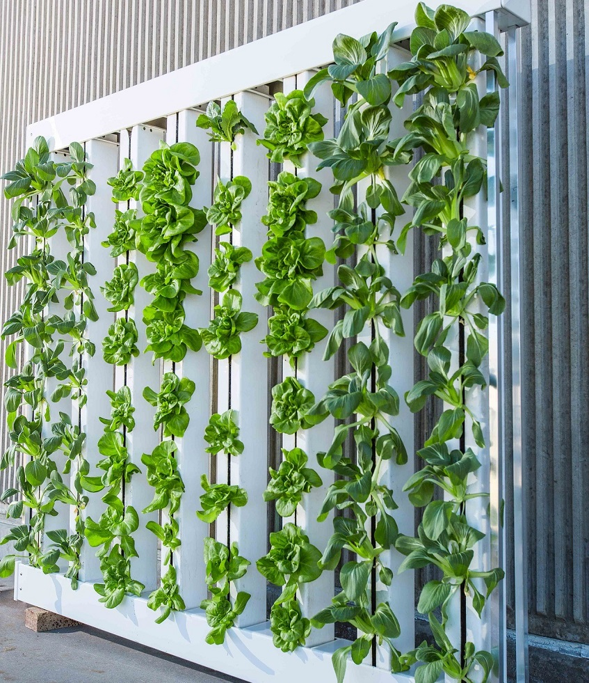 vertical farming technology - agriculture sensors